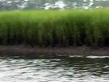 Strand feeding dolphins Charleston South Carolina