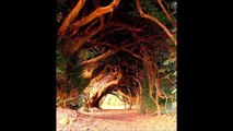 Living Tunnels Made of Trees HD 2014 HD