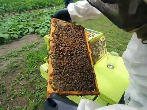 6-4-15 Honey Bee Hive Inspection