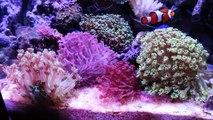奥行60cmの臨場感たっぷり海水魚サンゴ水槽マリンキープ