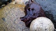 Sea slug at Cabrillo National Monument tide pools, San Diego California