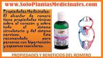 Propiedades Medicinales del Romero-Propiedades Curativas