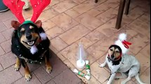 """Cats and dogs playing together """"Happy Christmas Dogs"""""""