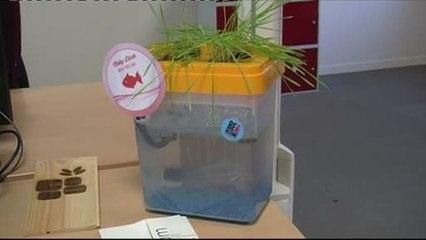 Jeune entrepreneur: Création d'un aquarium inédit (Toulouse)