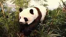 Sala 3 Asia (China) - Museo de la Fauna Salvaje