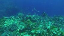 Plongée - Ilôt Tenia - Nouvelle-Calédonie