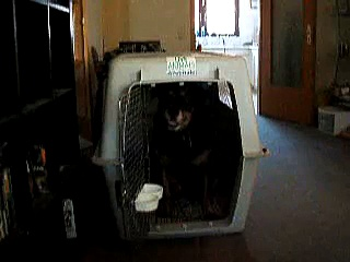 Salem the gentle Rottweiler – Travel Crate