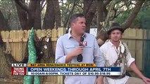 ABC Action News Weekend Edition: Renaissance Festival Mermaids