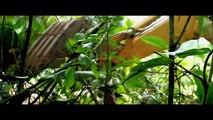Bande-annonce : The Green Inferno réalisé par Eli Roth