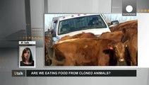 UE : mangeons-nous des aliments issus d'animaux clonés ?