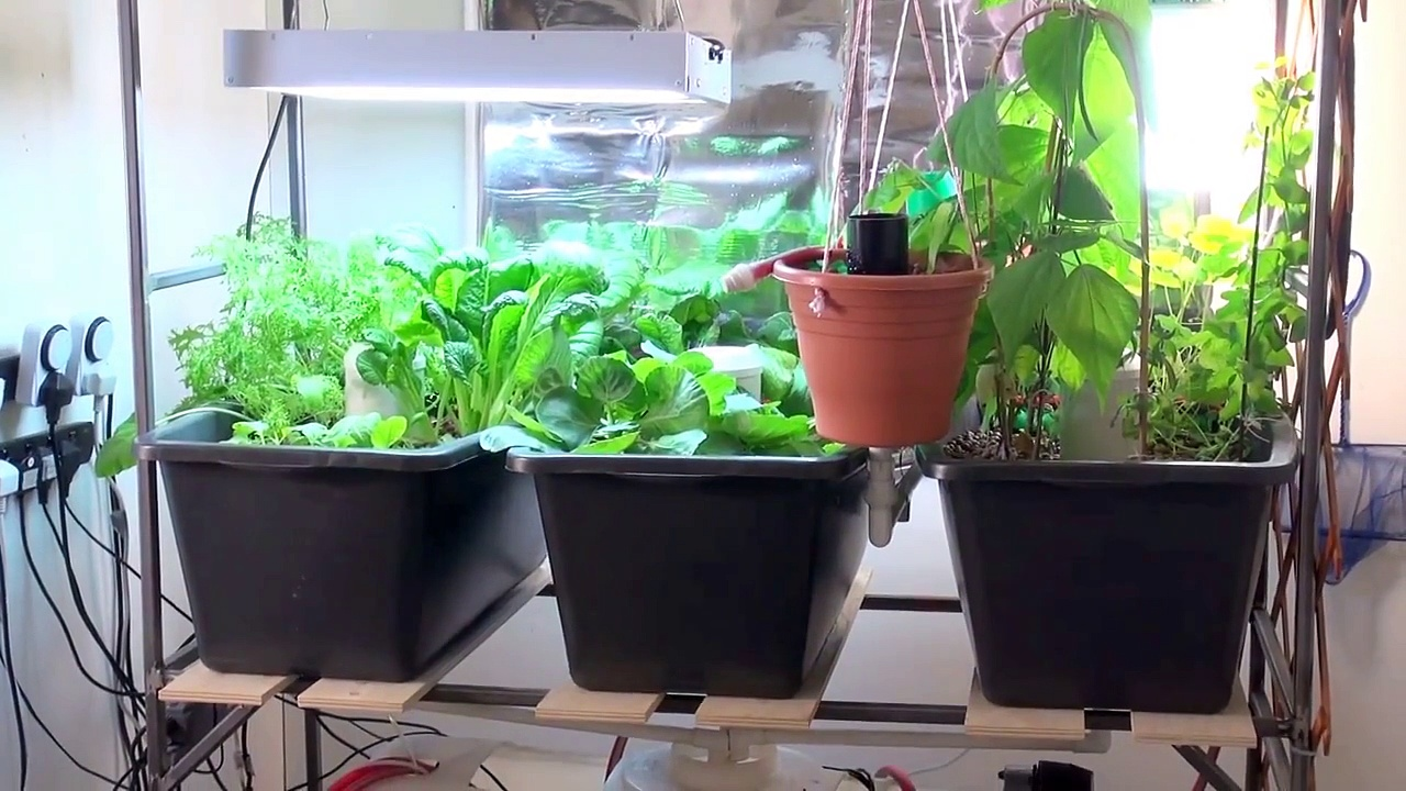 How To Build A Simple Home Aquaponics System