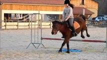 Samedi 08 Mars 2014 - Cours compétition (saut + jeux à poneys!)