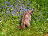 chats dans l'herbe (suite)