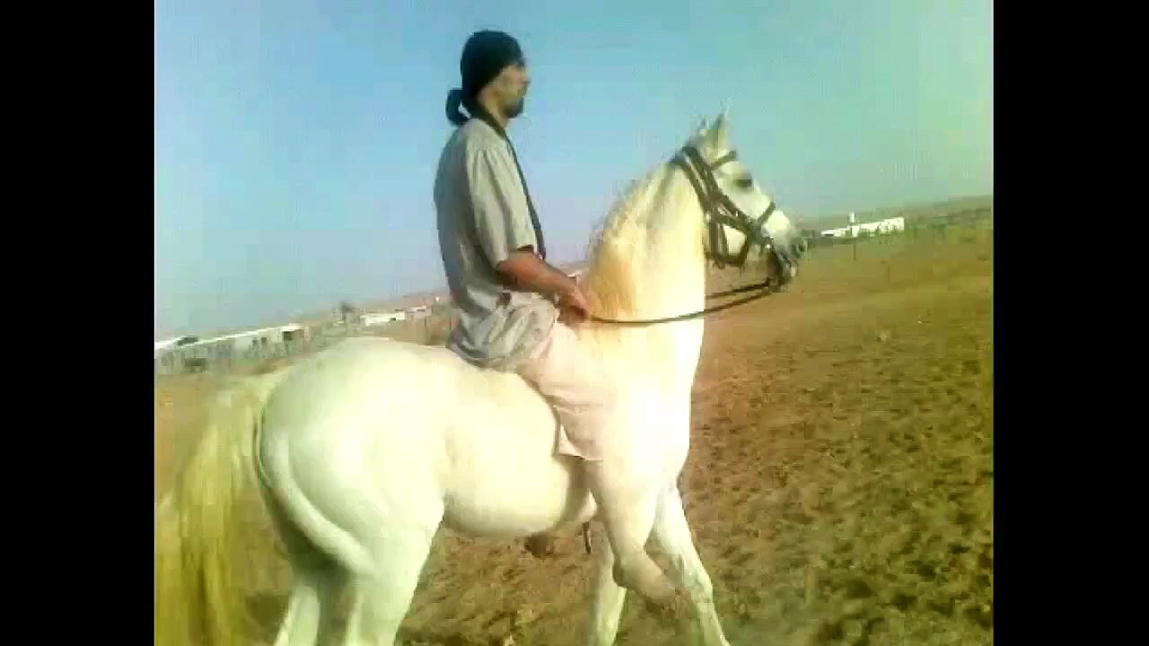 Riding Horses (Arabian Riding 428) same fear different results