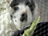 Emily Junior eatin' broccoli