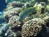 Snorkling in Sharm