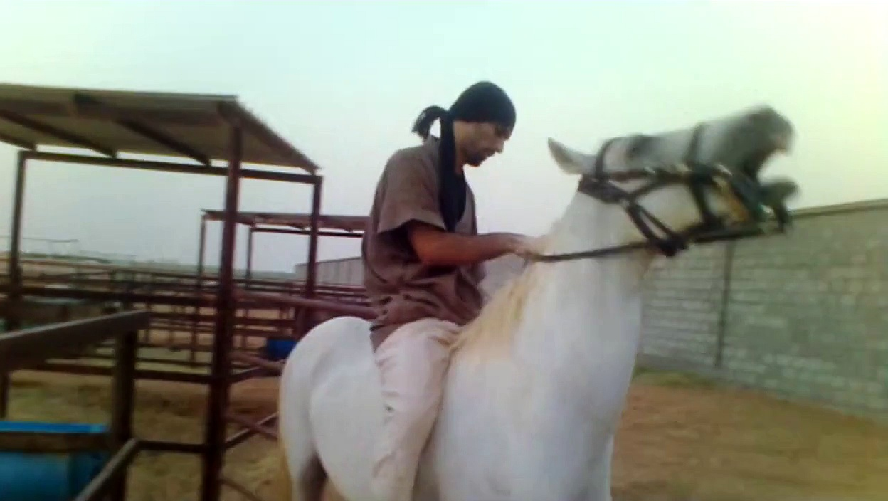 riding horses (arabian riding 247) stallion and foal