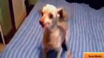 Amusant d'animal, des vidéos. Drôle de animaux