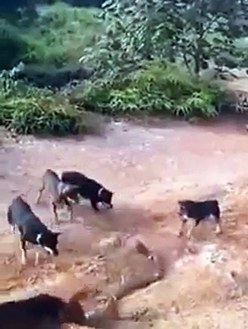 National Geographic Documentary Wild Animals attack National Geographic Animals  1