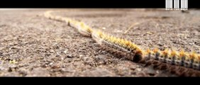 Walk the walk (The caterpillars walk)