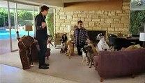 Funny Bud Light Beer Dog Sitter Sitting Super Bowl Commercial Advert TV Spot for Here We Go in 2011