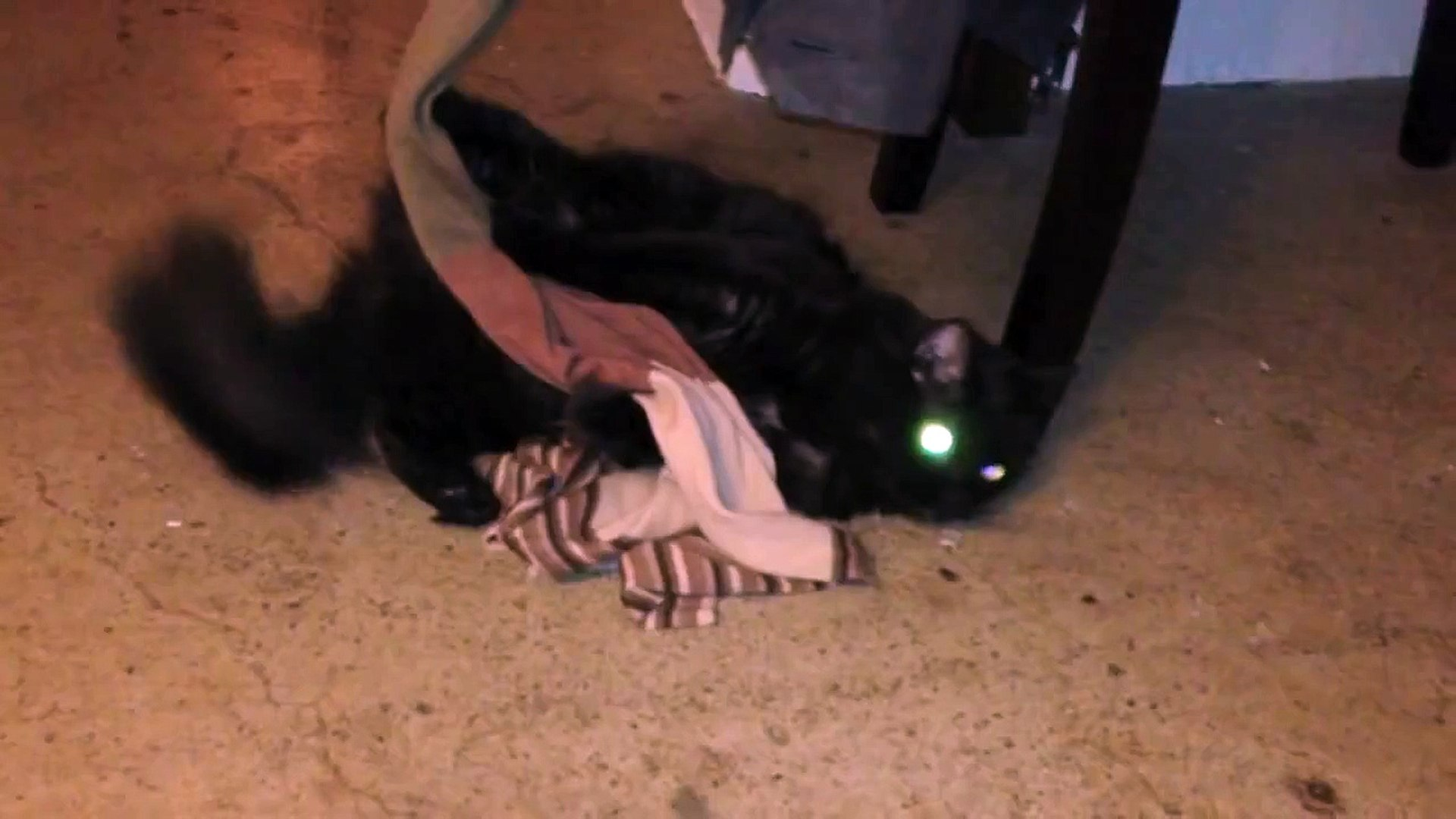 Crazy Kitteh HATES clothes!