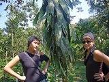 Dans la jungle en Equateur