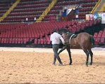"Hasta-Luego Spectacle Equestre  "" Clip """