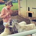 HILARIOUS! Taylor Swift tries to reason with Sheep