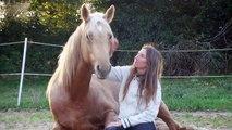 Marie Madec et ses chevaux: LIBERTE Entier palomino 5 ans et Hongre 8 ans