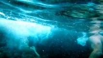 Perro de Agua Español buceando. Spanish Water Dog diving.