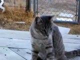 Felix (Feelie) Behaving Badly!