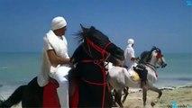Spectacle de chevaux sur la plage de Djerba - FANTASIA