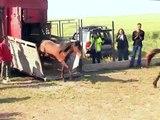 Help VIER PFOTEN save the Letea Horses.