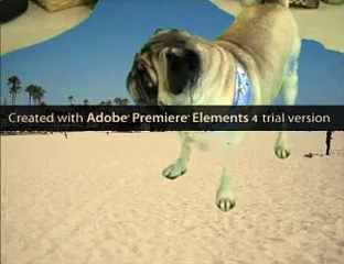 greenscreen test with pug