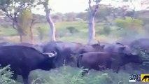 National Geographic Documentary Wild Animals attack National Geographic Animals  6