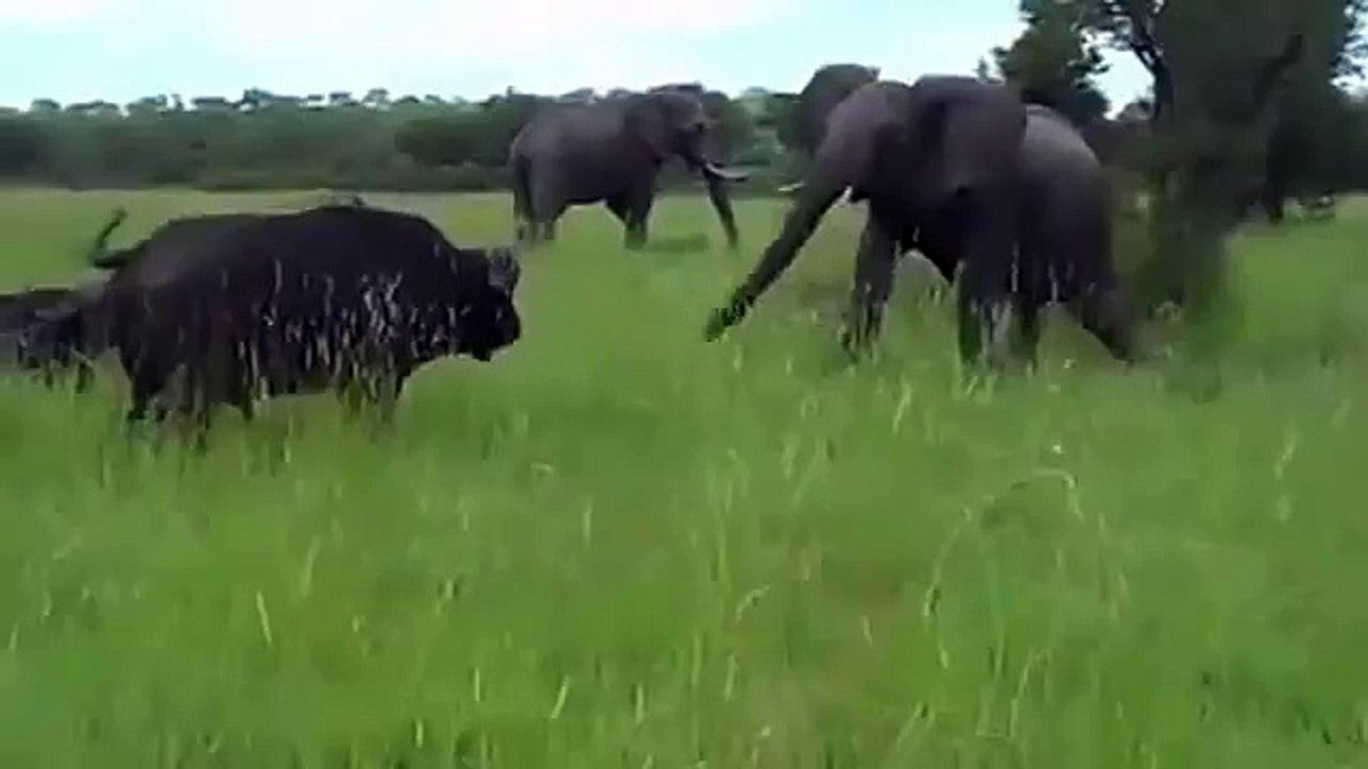 National Geographic Documentary Wild Animals attack National Geographic Animals  3
