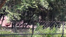 Nehru Zoological Park Hyderabad - Green Ride 1