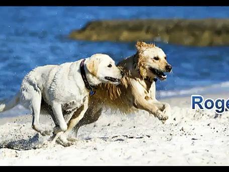 Health and wellness web portal…For pets?