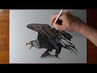 How I draw an eagle