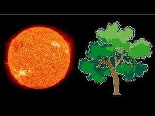 Mesurer la densité du soleil grâce aux arbres - Scilabus 20