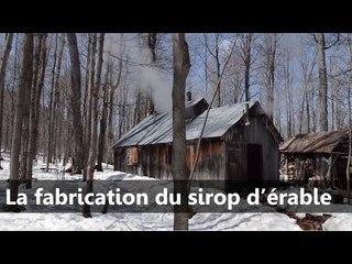 La fabrication du sirop d'érable - Scilabus 28