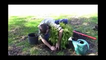 How to Plant Shrubs and Small Trees: Step-by-Step Gardening