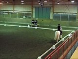 Irish cob (tinker) Domino bored with dressage