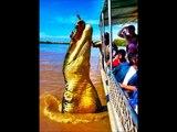 Strange Animal Pics - Version 1 - Scary Animal Photos - Giant Versions of Animals