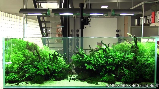 [ADA view 351] Follow-up video of NA Gallery aquariums.