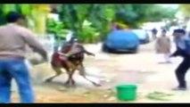 ACTION HEROS ANIMAL STUNT