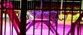 CIRCO FLORILEGIO   circo darix togni  il circo togni   famiglia togni è una trai più importanti circhi al mondo  numerosi gli spettacoli soprattutto con animali e belve feroci  tigri  leoni