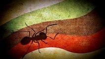 Ameisen-Lasius niger/flavus Gründerkolonie füttern
