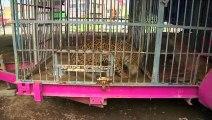 Les cirques mexicains ne peuvent plus exhiber d'animaux